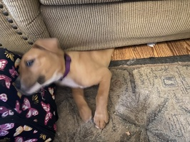 Tikka sofa squeeze